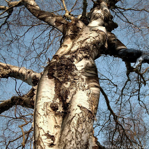 00028645 - woman - tree [amazing]