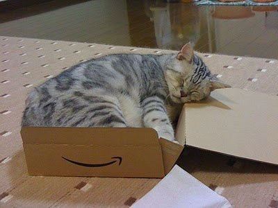 001image - cats in boxes