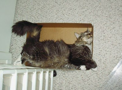 003image - cats in boxes