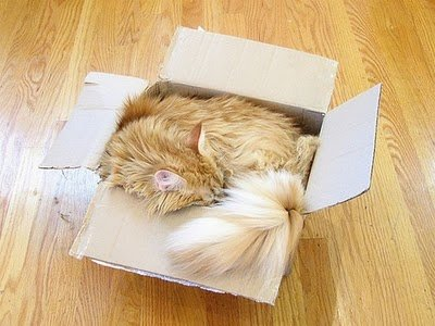 004image - cats in boxes