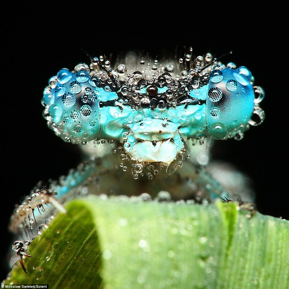01 - stunning pictures of sleeping insects covered in water droplets