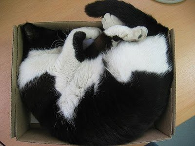 011image - cats in boxes