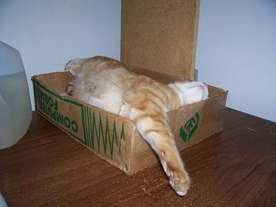 013image - cats in boxes