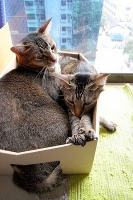 014image - cats in boxes