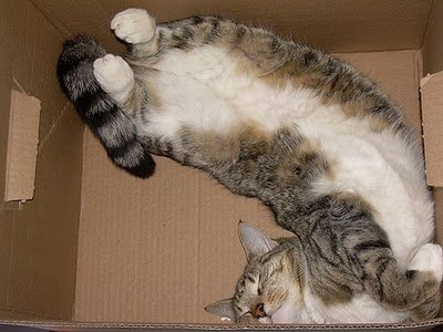 016image - cats in boxes