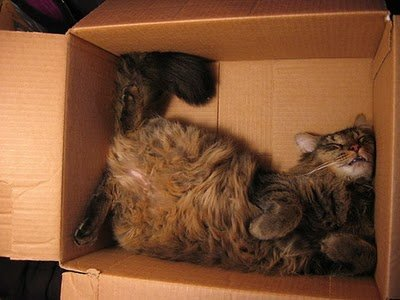 017image - cats in boxes