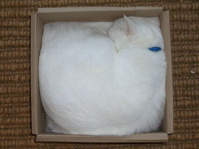 018image - cats in boxes