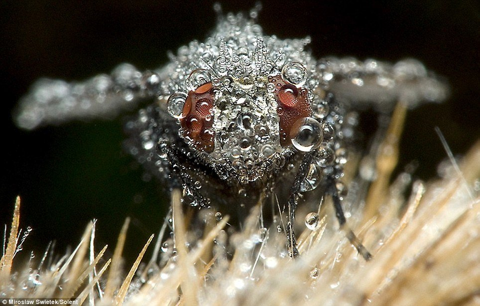 02 - stunning pictures of sleeping insects covered in water droplets