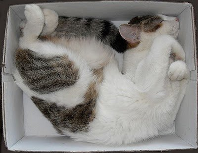 021image - cats in boxes