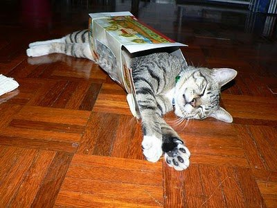 024image - cats in boxes