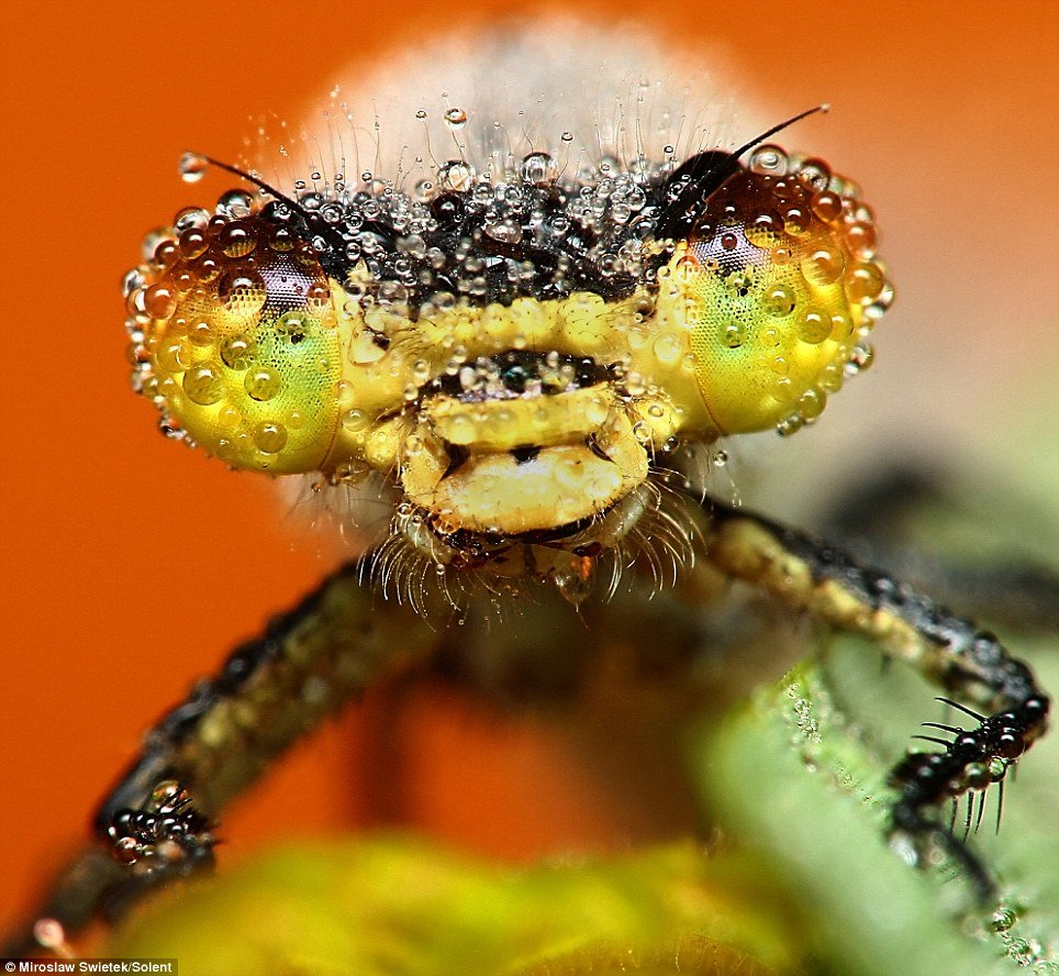 05 - stunning pictures of sleeping insects covered in water droplets