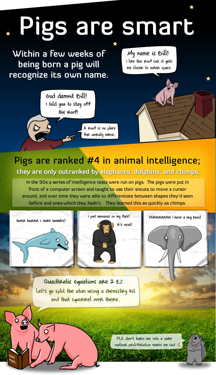 1 - 5 reasons pigs are way more awesome than you