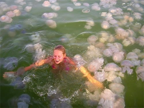 1 - a lot of jelly fish