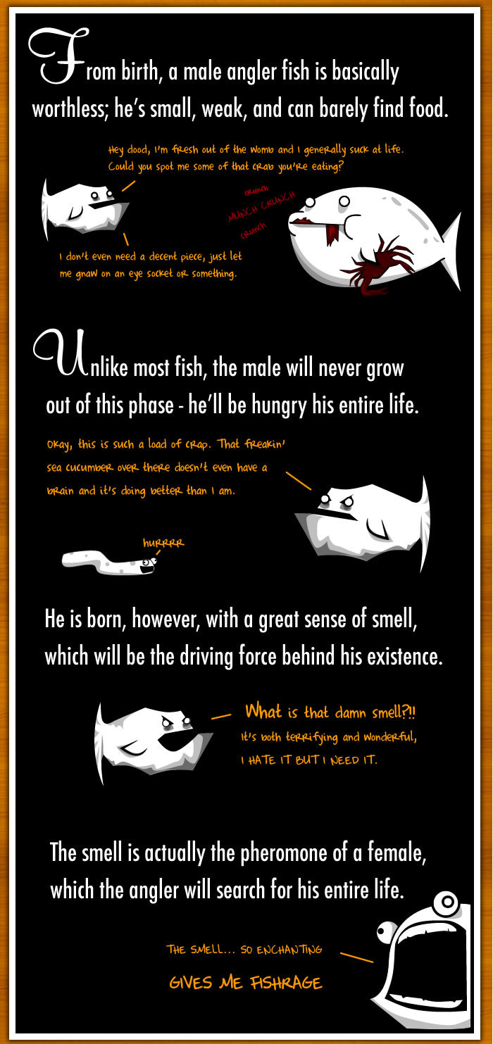 1 - how the male angler fish gets completely screwed