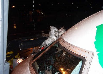 1 - what happens when a bird hits planes