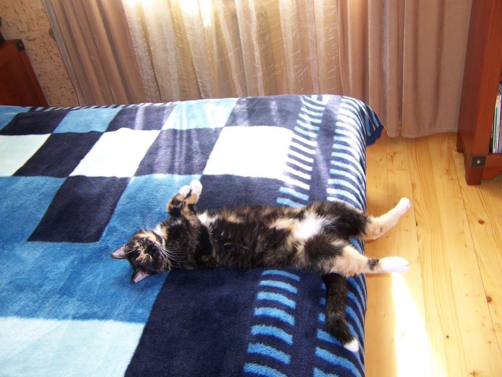 10 - my cat's ultimate sleeping positions