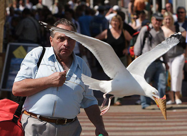 10 - the 51 most perfectly timed photos ever.