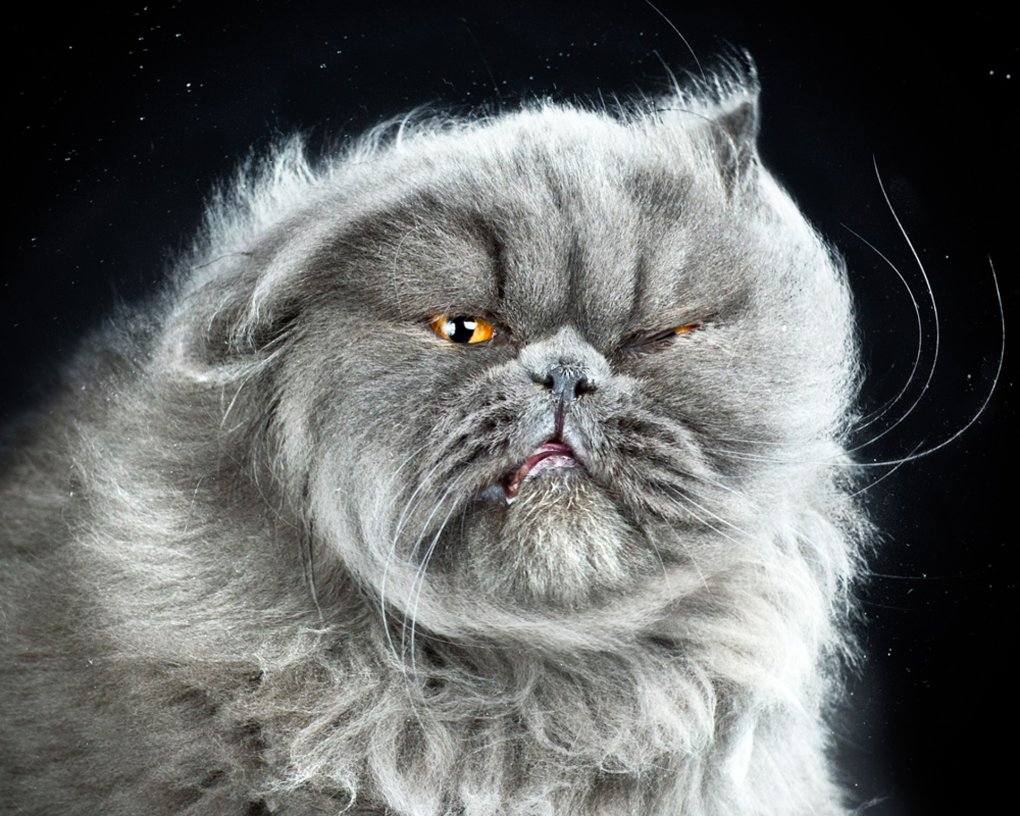 1000e - what cats look like when they're shaking off water