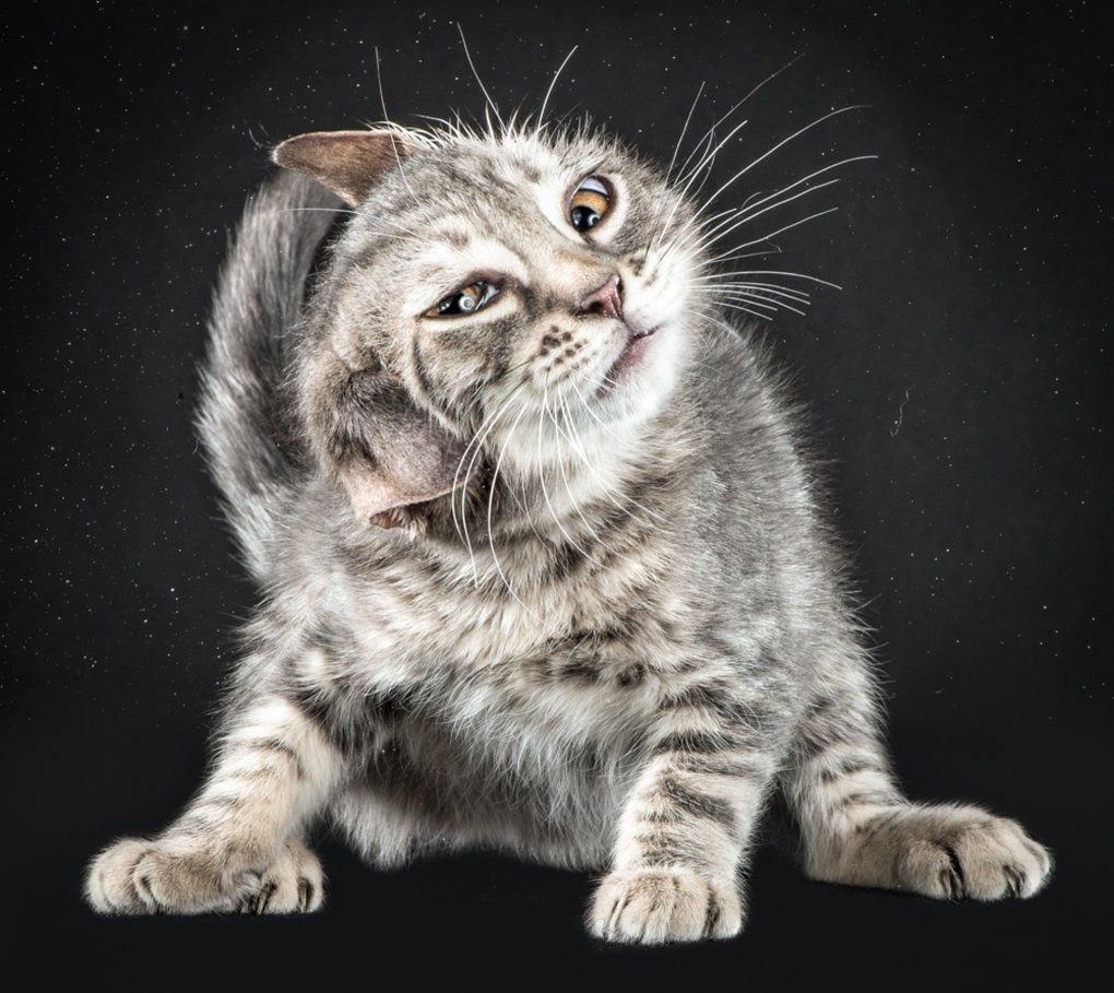 1000h - what cats look like when they're shaking off water