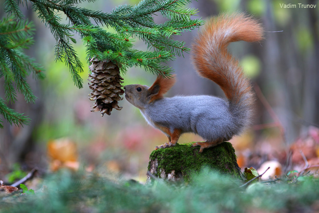 1015357 - wonderful small wildlife photos under tree