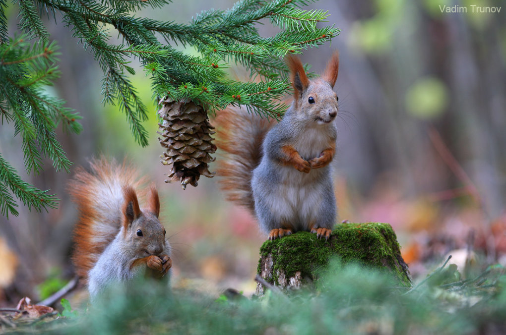 1015358 - wonderful small wildlife photos under tree