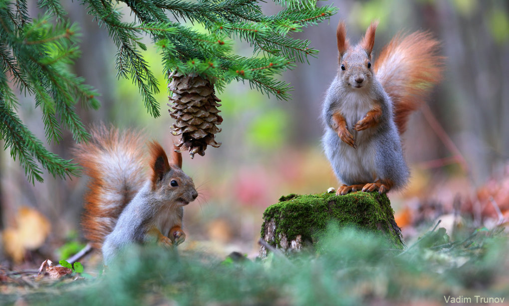 1015360 - wonderful small wildlife photos under tree