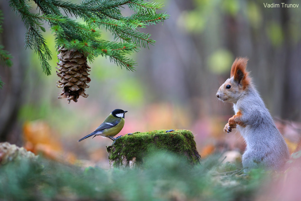 1015362 - wonderful small wildlife photos under tree