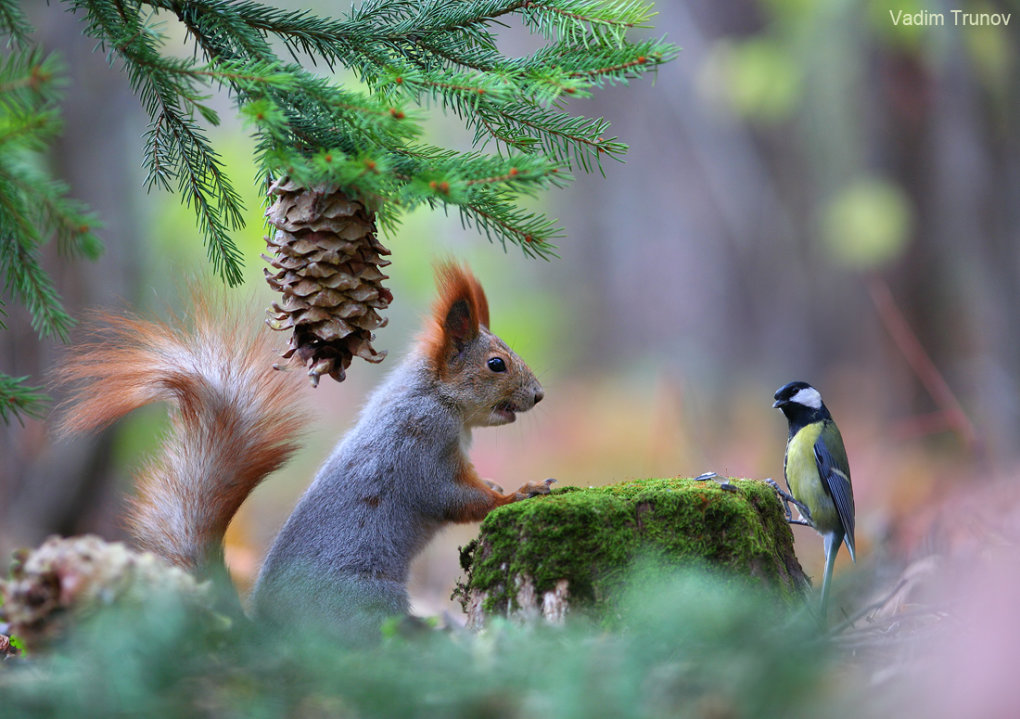1015364 - wonderful small wildlife photos under tree