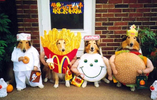 12 - funny dog costumes
