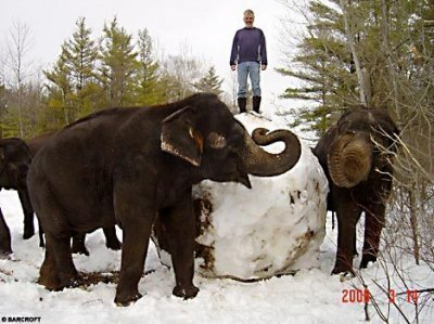 12 - two elephant made a bigest snowball