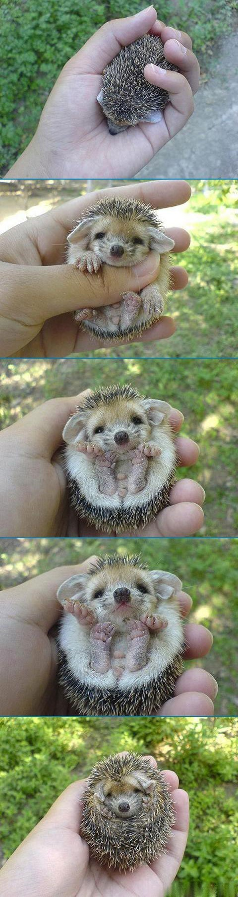 1236857477kd1zhe3 - cuttest little living thing is
