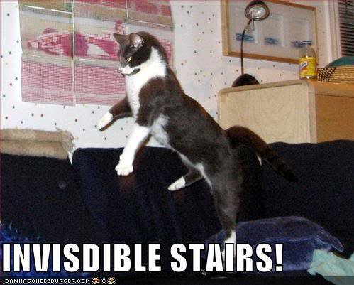 128298054843751250invisdiblesta - cats invisible things: part 2
