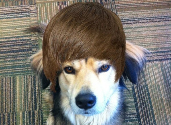 "12925838751 1 photo - justin ""the dog"" bieber"