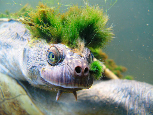 1490975712 5c5d2b3b3a - mary river turtle