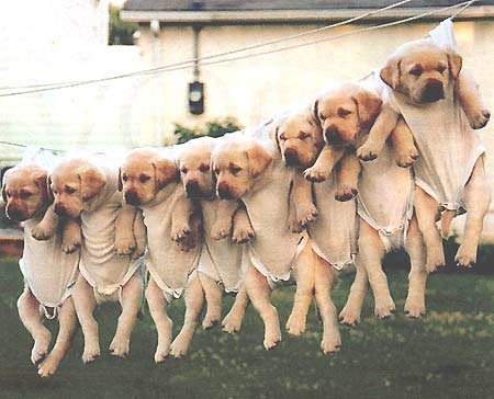 hanging dogs