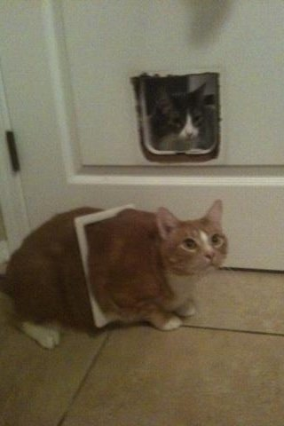 17 this fatass - 32 cats who had a worse year than you