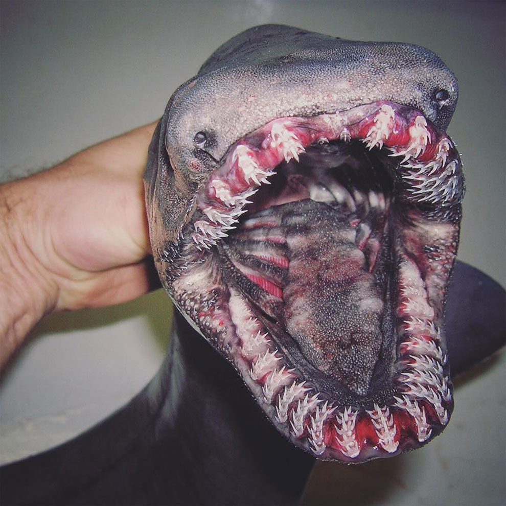 18 37 - the most horrific sea creatures you'll ever see