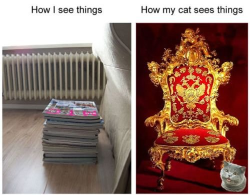 1katzen - cats and elephants - how my cat sees the world / ele-camouflage