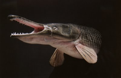 2 - the most horrible fishes with teeth