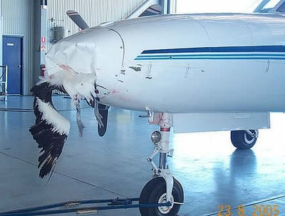 2 - what happens when a bird hits planes