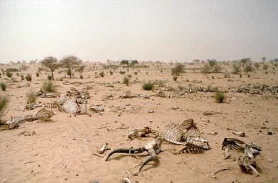 2000431286900589948 rs - 5 deadliest effects of global warming
