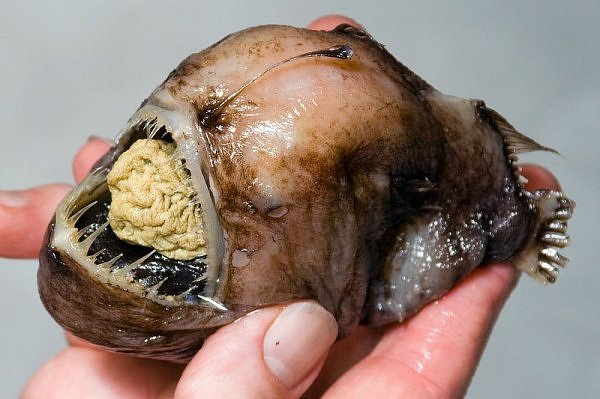 2178087930104181437s600x600q85 - most diabolical fish on earth