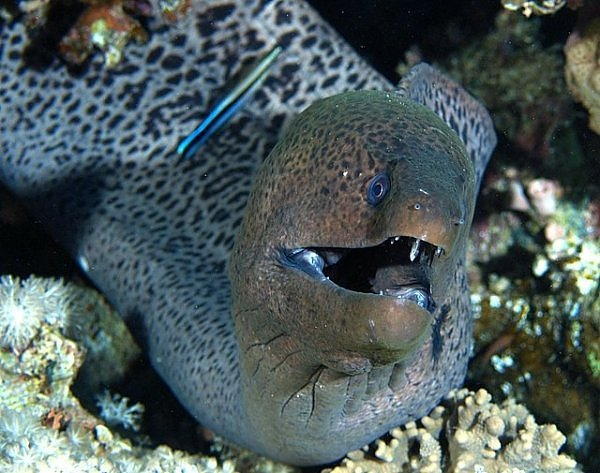 2241037500104181437s600x600q85 - most diabolical fish on earth