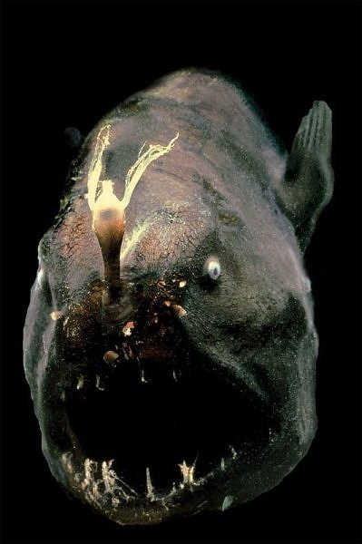 2252880700104181437s600x600q85 - most diabolical fish on earth