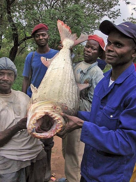 2335230560104181437s600x600q85 - most diabolical fish on earth