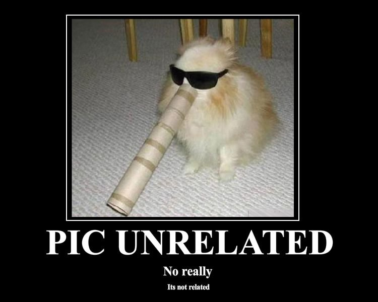 258720 20animals20cat20paper tube20pic unrelated20sunglasses - to our sharenator veterans.