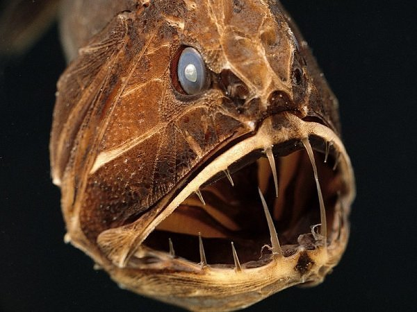 2730255060104181437s600x600q85 - most diabolical fish on earth