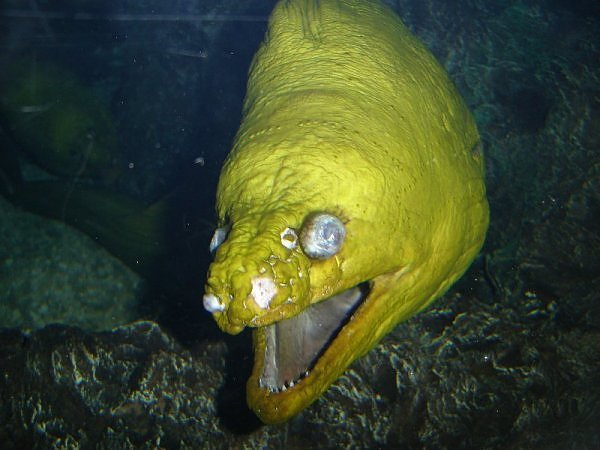 2871377770104181437s600x600q85 - most diabolical fish on earth