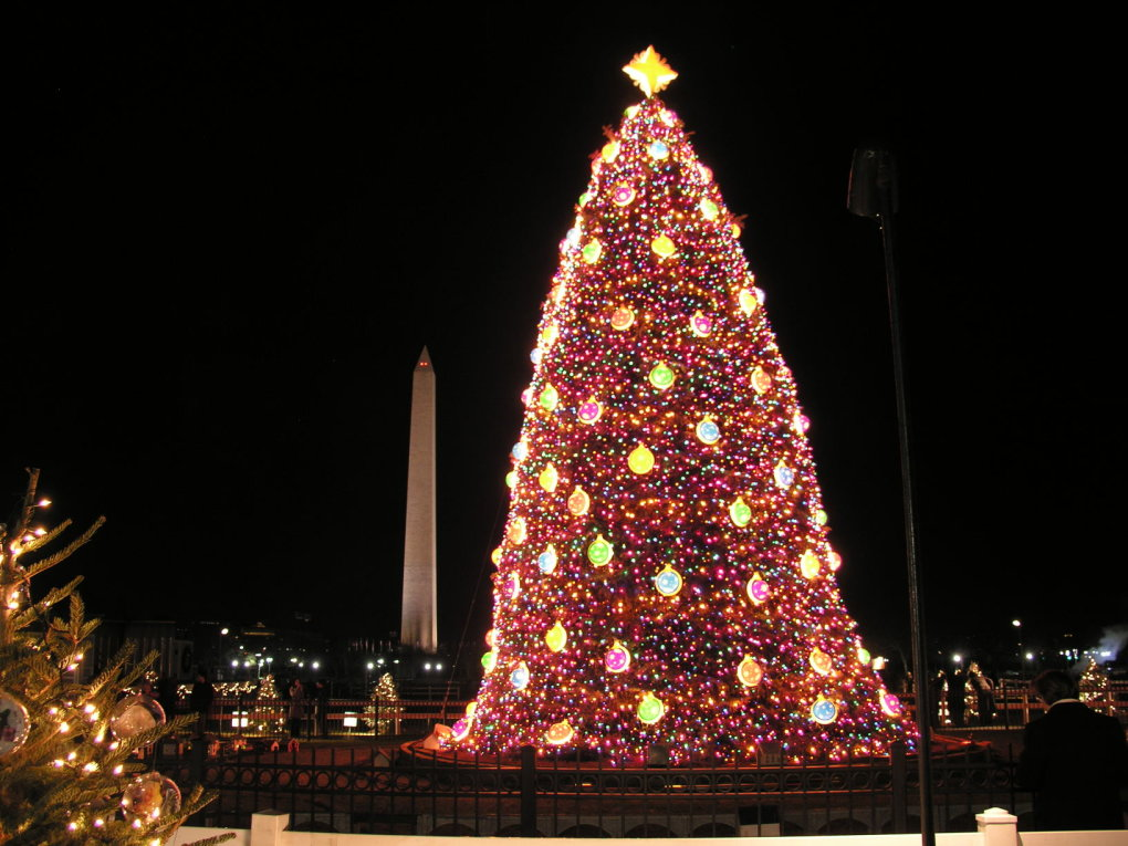298250 - amazing christmas trees-counting down to xmas #9