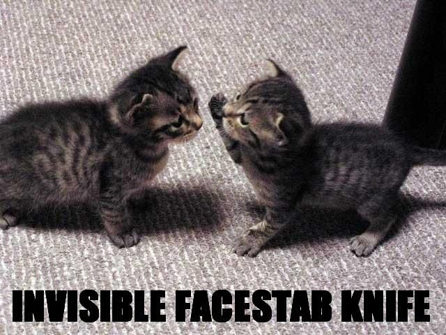 2cglf5v - epic invisible cat wins!!!!!!!!!!!!!!!!!!